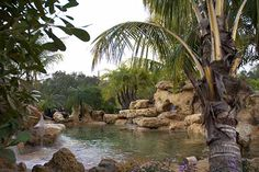 Natural Lagoon Swimming Pool with sand bottom by designer Lucas Congdon in Sarasota, FL