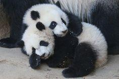 Snuggle Cubs by smileybears, via Flickr