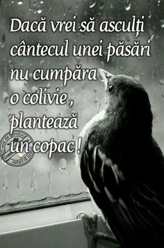 True Words, Bird, Quotes, Animals, Inspirational, Bible, Quotations, Animales, Animaux