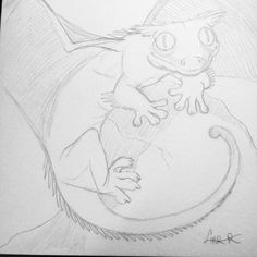 Crested Dragon. This little guy enjoys his tropical environment and sunning himself on rocks. Opening his wings gives him more surface area to warm up but a stray breeze might initiate liftoff! #faunafantasy #fauna #fantasy #crested #dragon #gecko #art #artist #pencil #artistsofinstagram