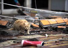 """Ota retrata a un gato en Fukushima: """"Su pelaje enredado indica que ha sobrevivido en condiciones duras. El cuerpo fue encontrado un mes después de tomar la foto"""". Photo: Yasusuke Ota"""