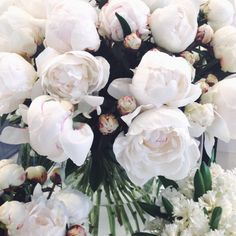 no rain, no flowers ❁ // Flowers Nature, My Flower, Pretty Flowers, Fresh Flowers, White Flowers, White Peonies, White Roses, Summer Flowers, Cut Flowers