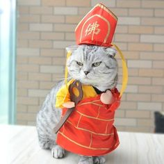 Funny Pet Clothes Monk Tang Cosplay Costume For Cats Halloween Xmas Dog Clothing Cat Buddhist Suit Journey To The West Series Gifts For Pet Lovers, Cat Gifts, Cat Lovers, Cat Costumes, Cosplay Costumes, Pet Clothes, Cat Clothing, Cheap Pets, Journey To The West