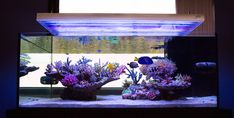 Do you have nice aquascaping? if so let's see it.. - Page 24 - Reef Central Online Community