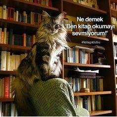 kitap okumayı sevmemek mi?