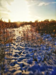Claes`s Photo blog: a magical winter wonderland