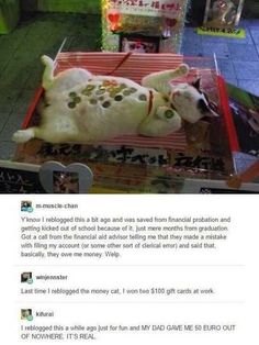 "Just in Case Lol ""the money cat"" Funny Cute, The Funny, Hilarious, Daily Funny, Tumblr Stuff, Tumblr Posts, Tumblr Funny, Funny Memes, Funny Animals"
