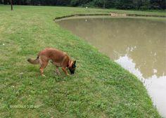 Dog Parks in Columbus