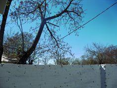 Esta  fotografía pertenece a un paisaje de mi ciudad con árboles y el cielo detrás.  El binomio que emplee fue luz natural con luz fría, y lateral . Se resaltan el color azul y el verde. Dependiendo la iluminación del contexto en que fue sacada la fotografía ya que fue tomada cercana al mediodía respetando los colores naturales, y fue retocado su brillo ,color ,luminosidad y contraste con GIMP.