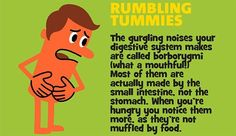 digestive system rum