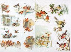 Rice Paper for Decoupage Decopatch Scrapbook Craft Sheet Vintage Bird Family 2