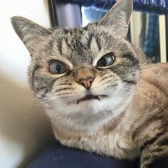 Happy Caturday!  #caturday #catstagram #catsagram #cat #cats #kitten #instacat  #catsofinstagram #catsoninstagram #pet #pets  #cute #cutecat  #instacat_meows #catoftheday #gato #cats_of_instagram  #cutepetclub #thedailykitten  #kittycat #catlover #ilovecats #animals #meow #instacute #photooftheday by loki_kitteh