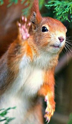 See ya later. ❊ (see more great squirrel pins on **Feelin' Squirrely** group board) TOO FUNNY, OUI ! Nature Animals, Animals And Pets, Baby Animals, Funny Animals, Cute Animals, Beautiful Creatures, Animals Beautiful, Cute Squirrel, Squirrels