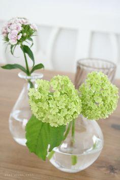 On our kitchen table | von herz-allerliebst