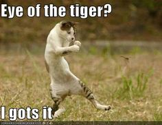 funny-pictures-boxing-cat-rocky1.jpg?w=300&h=233