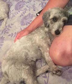 LOST DOG: 08/06/2017 - San Leandro, California, CA, United States. Ref#: L34947 - #CritterAlert #LostPet #LostDog #MissingDog