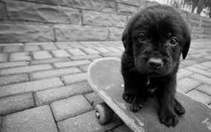 Image result for cute sad animals