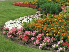 Very large and colorful flowerbed.