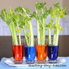 celery experiment by Teaching Tiny Tots