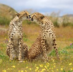 Two spotted girls by Martin Groth