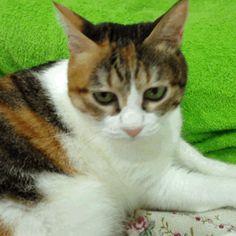 (GIF) THIS CAT