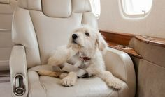 Flying with pets? Here are things that you would need.