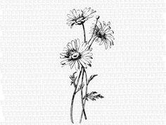 Antique image of wild daisy flower vintage clip art illustrations printable high quality digital graphic 1397 - Vintage Blume Tattoo, Vintage Flower Tattoo, Tattoo Vintage, Vintage Flowers, Pretty Tattoos, Sexy Tattoos, Small Tattoos, Tattoo Oma, Vintage Clip Art