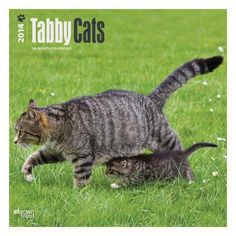 Tabby Cats 2014 Wall Calendar: The term I Love Cats, Cute Cats, Cats And Kittens, Kitty Cats, Cat Calendar, Calendar 2014, Chat Web, Cat Wall, Blue Nails