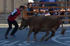 Santacara: Vacas de la Ganadería Merino de Marcilla Año 2015 ... Cow, Animals, Cows, Animales, Animaux, Cattle, Animal, Animais