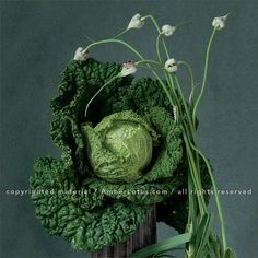 Image from our Simply Raw 2016 wall calendar featuring vegetable portraits by Lynn Karlin and raw food recipes by Matthew Kenney. Click through to see the most recent edition!