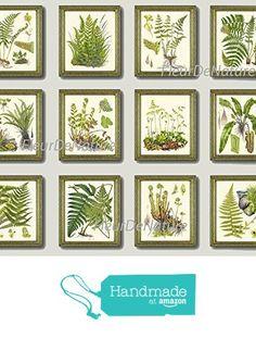 Botanical Set of 12 Prints Unframed Antique Beautiful Ferns Green Forest Nature Home Room Fern Decor Wall Art from LoveThePrint https://www.amazon.com/dp/B018RBSWLM/ref=hnd_sw_r_pi_dp_8mx9xbZPSRZEJ #handmadeatamazon