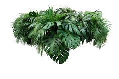 Photo about Tropical leaves foliage plant jungle bush floral arrangement nature backdrop isolated on white background, clipping path included. Image of evergreen, frame, isolated - 118961192 Tropical Landscaping, Tropical Garden, Tropical Plants, Plant Images, Garden Images, Tree Illustration, Landscape Illustration, Grass Photoshop, Jungle Images