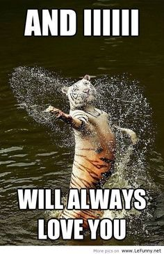 funny animal memes, animal pictures with captions, funny animals, tiger singing Animal Captions, Funny Animals With Captions, Cute Animal Memes, Funny Animal Quotes, Animal Jokes, Funny Animal Pictures, Cute Funny Animals, Cute Baby Animals, Funny Cute