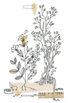 plantations, Cécile Hudrisier