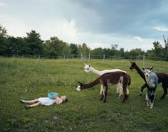 Amelia and the Animals: Photographs by Robin Schwartz by Aperture Foundation