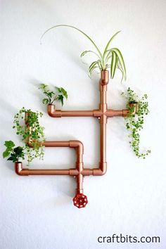 The last step is to put the plants in the fixture and mount it.