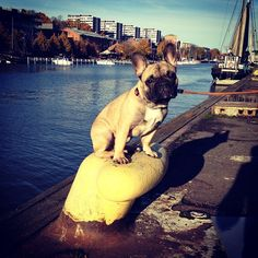 Some people from Turku called and told that there's an unpatrolled river running through the city. I had to run down there and fix the safety hazard. by hemmothefrenchie