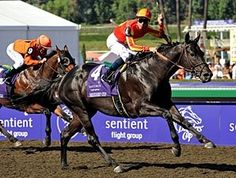Midnight Lute Makes It a Double - BloodHorse Breeders Cup Classic, Kentucky Derby, Horse Racing, Horses, Photo And Video, Animals, Instagram, Videos, Sweet