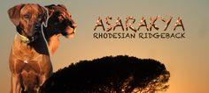 Wurfplanung Februar 2014  Rhodesian Ridgeback Welpen Shangani Eshe Yachter Shangani Eshe Amali Rhodesian Ridgeback