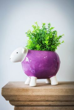 Live near Malton, North Yorkshire? Kemps General Store is proper stocked up with herdy goodies! North Yorkshire, General Store, Piggy Bank, Fun Stuff, Planter Pots, Goodies, Shops, Live, Beautiful