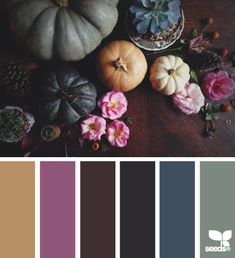 autumn hues | design seeds | Bloglovin'