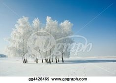 """Winter landscape and trees"" - Winter Stock Photo from Gograph.com"