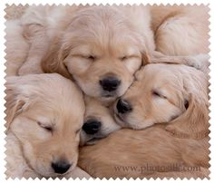 Puppy pillow! These little guys look so soft and cute snuggled together!