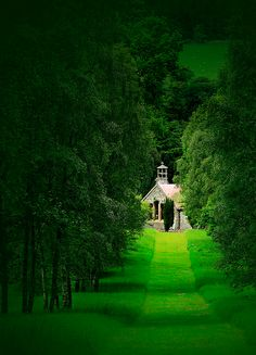 Dawyck Royal Botanical Gardens, Scotland.