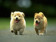 dogs funny,dogs training,dogs breeds,dogs diy  #flychord #flychordpiano
