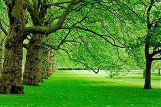 Nom du fichier=Alignement-de-platanes-a-Green-park-Londres.jpg Taille du fichier=6807Ko Dimensions du wallpaper / de la photo HD : 4247x2831 Image ajoutée le : 28 Décembre 2016