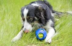 Help your dog wrok through their separation anxiety with Sbark Tikr Puzzle Toy for Dogs