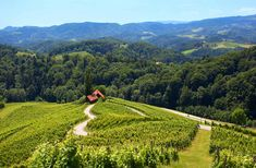 Slovenia is the only country with LOVE in its name, where even the roads are heart-shaped. Have you seen this lovely road among the vineyards in Svečina? The Beautiful Country, Central Europe, Hiking Trails, Alps, Vineyard, Country Roads, Tours, Wine, Photo And Video