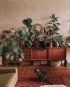Decoration Inspiration, Room Inspiration, Design Inspiration, Plantas Indoor, Cat Plants, Deco Nature, Decoration Plante, Mid Century Modern Living Room, Mid Century Modern Sideboard