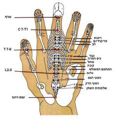 Hand and Foot Reflexology Chart. 25 Hand and Foot Reflexology Chart. top Of Foot Reflex Chart Vatan Vtngcf Reflexology Points, Reflexology Massage, Acupressure Points, Lymph Massage, Auswirkungen Von Stress, Health And Beauty, Health And Wellness, Alternative Health, Holistic Healing